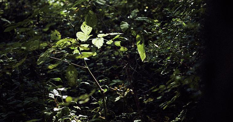 軽井沢の自然